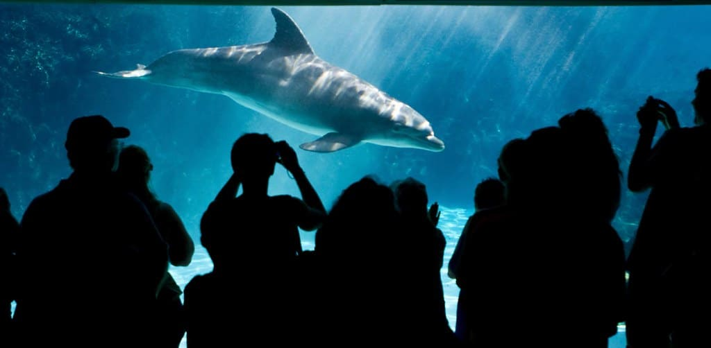 Visiting the Florida Aquarium is one of the best things to do in Tampa with kids