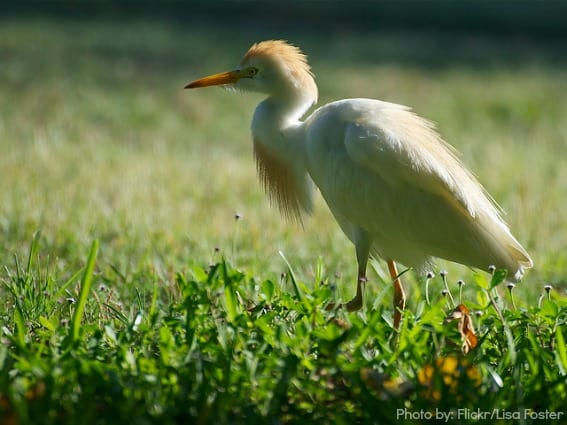 Bird-Watching at Dry-Tortugas-National-Park