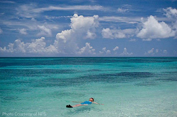 dry-tortugas-swimming
