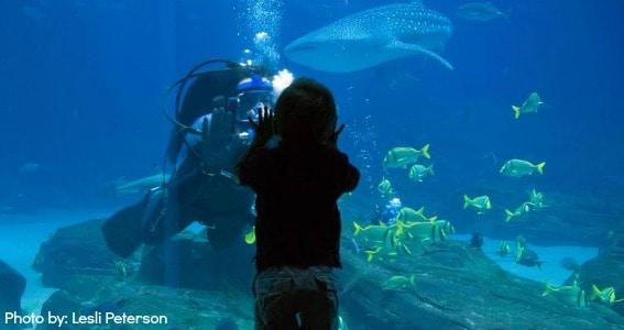 Georgia Aquarium Top things to do in Atlanta Georgia with Kids