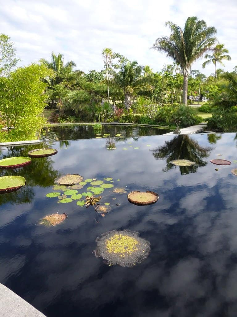 Things to do in Naples Florida with kids include visiting Naples botanical gardens