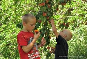 Fruita NPS