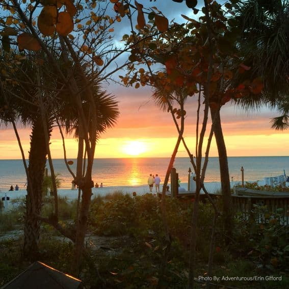 Gumbo Limbo Sunset Naples, FL
