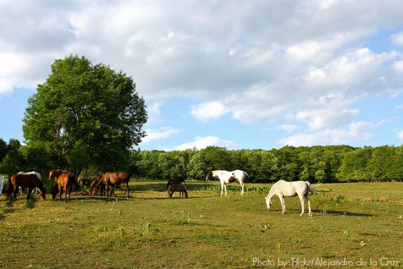 Catskills horses