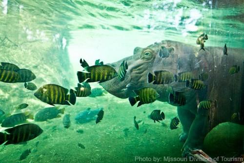 St. Louis Zoo