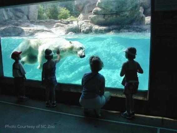 North Carolina animal adventures with kids