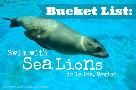sea lions in La Paz, Mexico