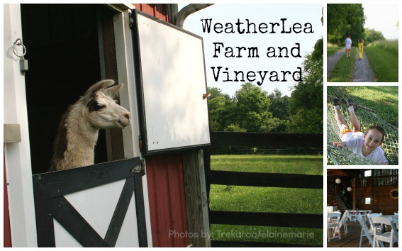 WeatherLea-Farm-Collage-Text-Trekaroo