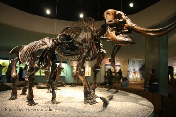 Fantastic Kid-Friendly Science Museums Around the United ...