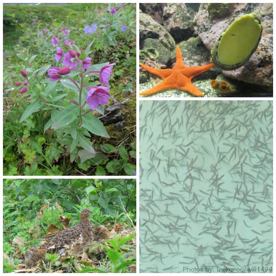 flora and fauna of southeast alaska
