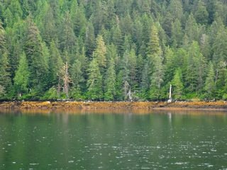 Misty Fjords Temperate Rainforest - Wikimedia Commons / Kimberly Vardeman