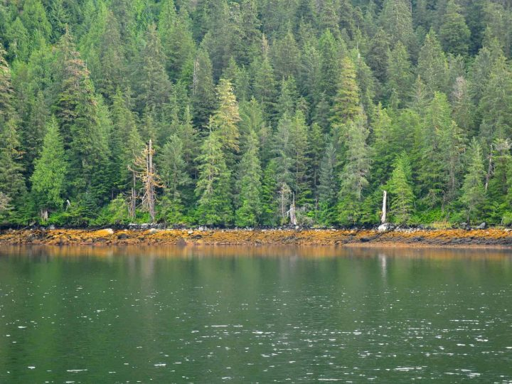 Road School Guide: Exploring Temperate Rainforests with Kids