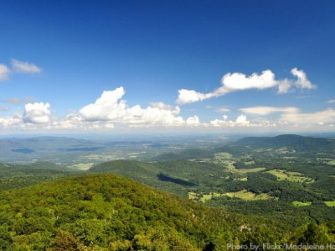 Road School: Family Field Trip in Upland Forests of Shenandoah National Park