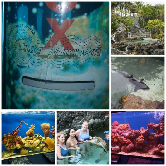 USVI CoralWorld Collage