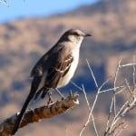 Tanque Verde Ranch - Western Adventures in the Sonoran Desert 2