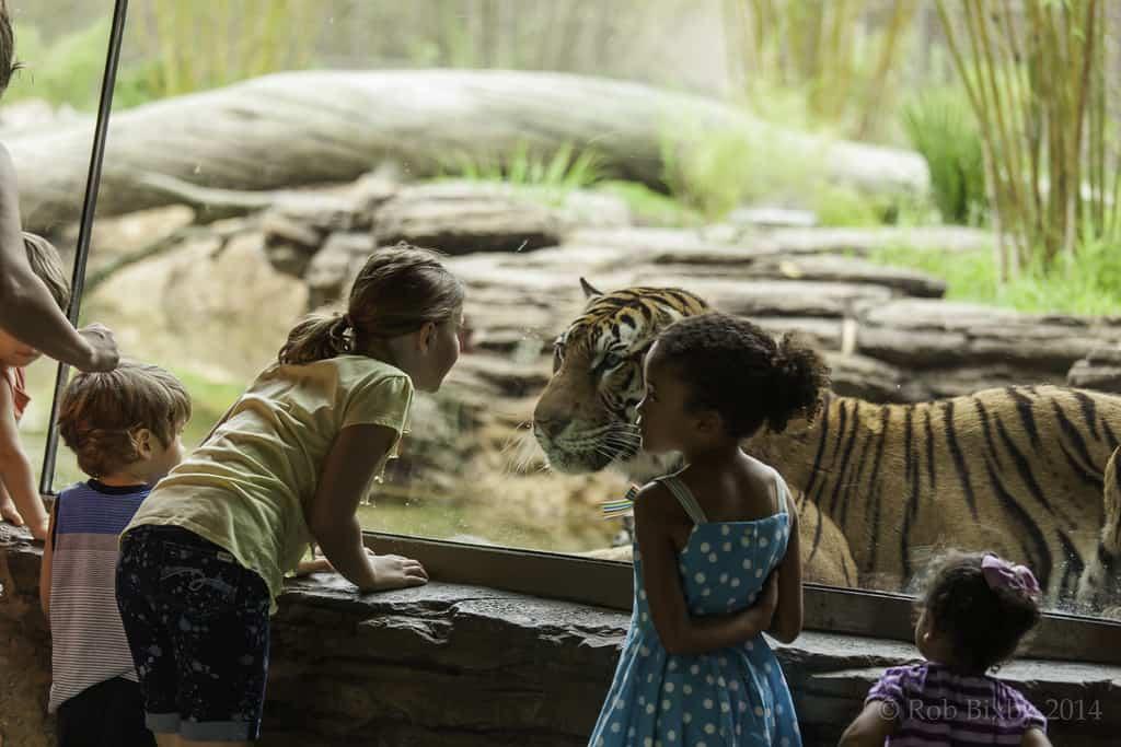 Jacksonville Zoo photo