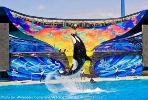 SeaWorld San Diego kids-free