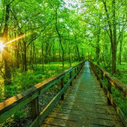 Top 10 Things to do in Mississippi with Kids