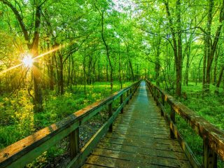 things to do in Mississippi Natchez Trace