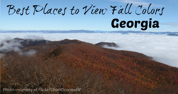 5 best fall colors, GA