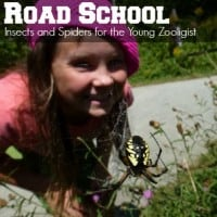Road School Insects square