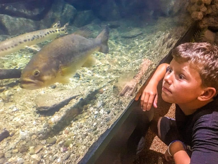 Fun things to do in Cleveland with kids Greater Cleveland Aquarium