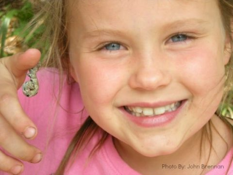 Road School: Insects and Spiders for the Young Zoologist