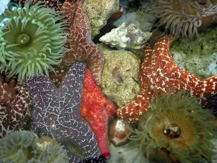 The 8 Best California Tide Pools
