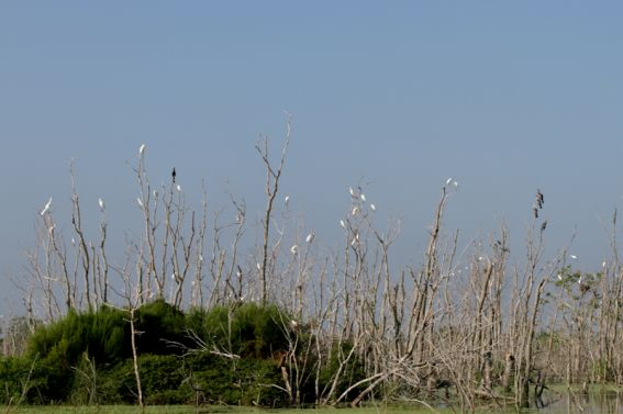 birds on Louisiana Swamp Tours