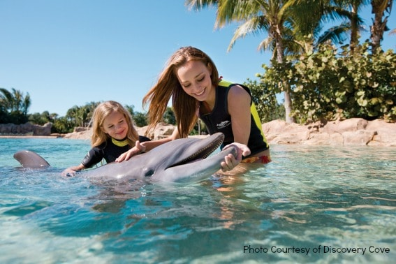 Top Orlando attractions: Discovery Cove Dolphin Interaction