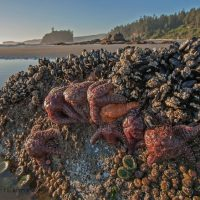 Best-Beaches-Tidepools-Olympic-National-Park