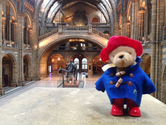 Paddington Natural History Museum
