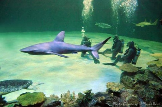 Mandalay_Bay_Shark_Reef_Aquarium_Dive_with_Sharks_low
