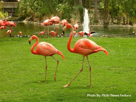 Top 10 things for families to do in fort lauderdale for Flamingo gardens fort lauderdale