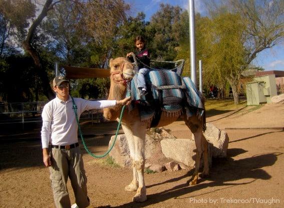 Phoenix-Zoo-Best-Kids-Activities-Trekaroo