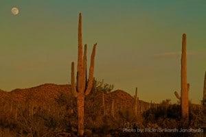 Tucson-Sunset-Saguaro-Cactus-Trekaroo