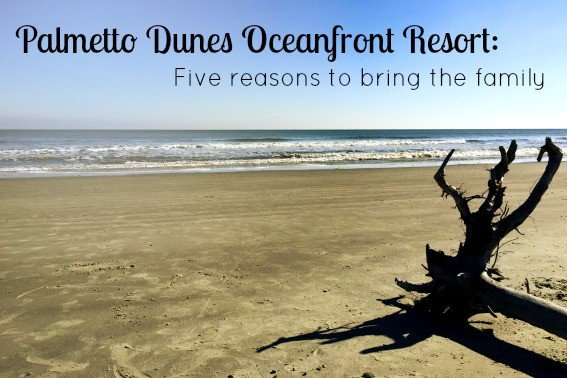 palmetto dunes oceanfront resort