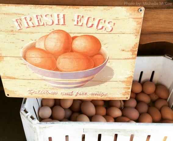 Fresh-farm-organic-free-range-eggs-Jackson-Family-Farm-Trekaroo