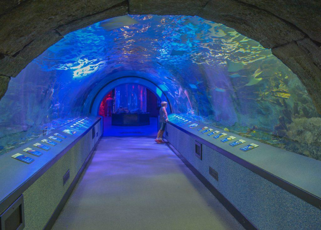 Newport Aquarium in Cincinnati