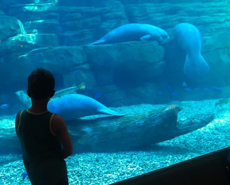 Fun Things to Do in Cincinnati with Kids Zoo