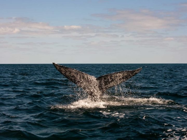 Bigstock/Full Whale Tail