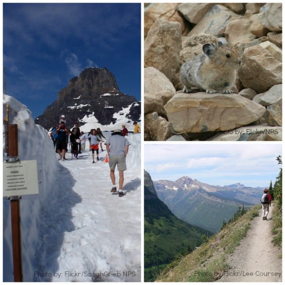 Logan Pass Collage