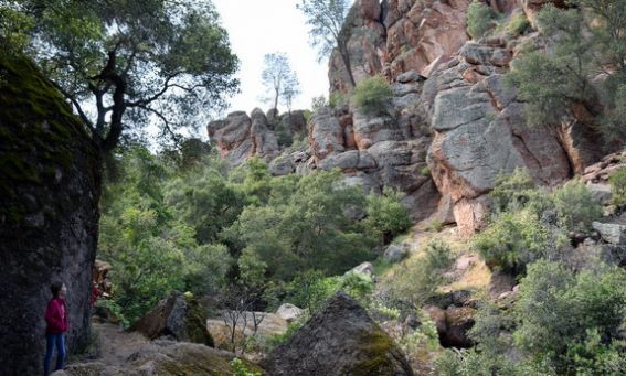 Know-Before-You-Go tips for Visiting Pinnacles National Park with kids