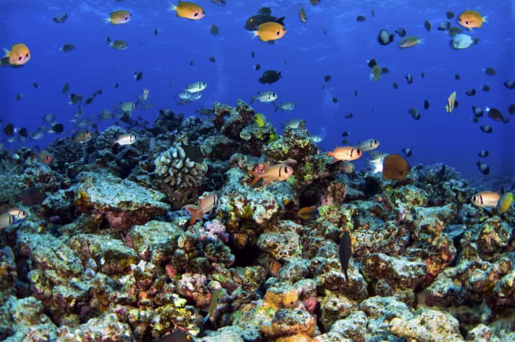 Some of the best Snorkeling in Hawaii is at Molokini Crater