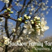 jackson family farm stay