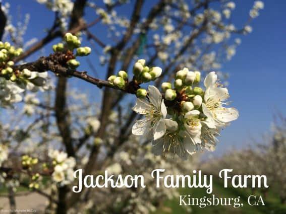 jackson family farm stay