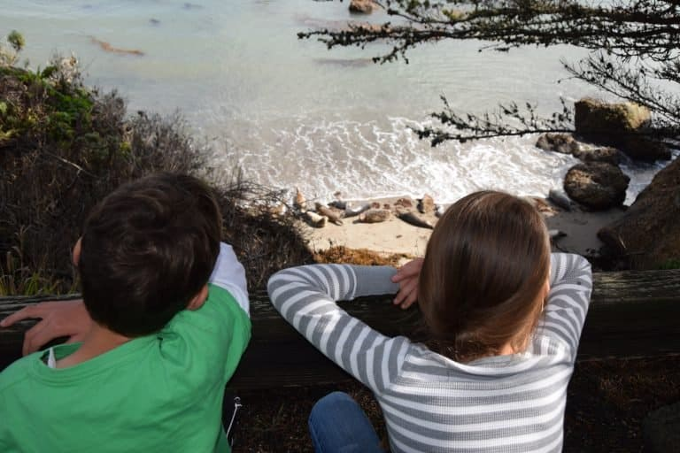Kids Looking at Seals at Point Lobos