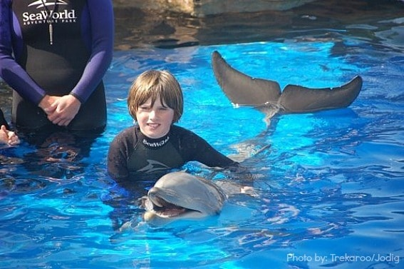 Sea-World-San-Diego-Kids-Dolphins-Trekaroo-win