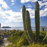 Cactus near the Sea of Cortes, Baja California, Mexico