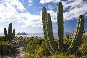 Cactus near the Sea of Cortes, Baja California, Mexico